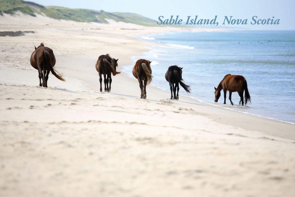 SableIsland-Postcard-3